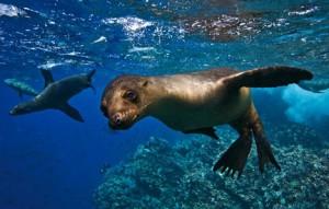 Iles Galapagos animaux