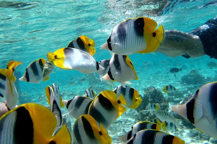 plongée sous marine iles marquises