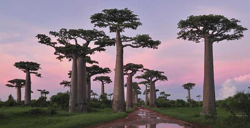 Visite de la Forêt Morondava - lors d'une croisière Madagascar