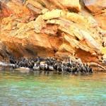 cormorans au Telegraph Island - Khasab Omab